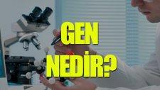 Gen Nedir? - Tek Cümlede Evrim