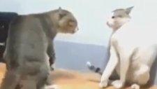 Acımasız Kedi Kavgası