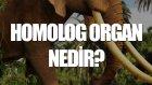 Homolog Organ Nedir? - Tek Cümlede Evrim