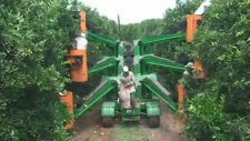 Portakal Toplama Makinesi
