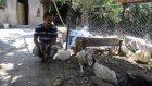 Sahipsiz köpeklerin koyunları telef ettiği iddiası - İZMİR