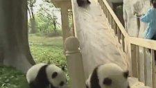 Kaydıraktan Kayan Pandalar