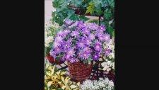 Anemon Çiçeği Soğanı Nasıl Ve Ne Zaman Dikilir