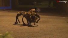 Mutant Dev Örümcek Köpek Şakası