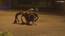 İnsan Yiyen Mutant Dev Örümcek Şakası