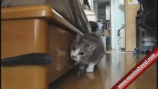 Komik Kedi Videoları 2014