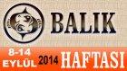 BALIK Burcu HAFTALIK Astroloji Yorumu 8-14 EYLÜL 2014 Astrolog DEMET BALTACI Bilinç Okulu