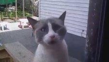 Hunharca Konuşan Kedi