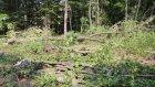 AİBÜ'de yol yapımı için ağaçlar kesildi - BOLU