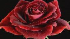 Gülbin Özer - Dağılmış Külleriz Sevda Yolunda