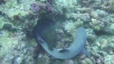 Köpekbalığı Ve Yılan Balığı Kapışırsa