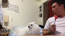 Sahibiyle Göz Göze Gelemeyen Köpek