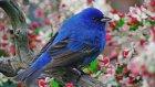 Düş Sokağı Sakinleri - Hüzün Kovan Kuşu
