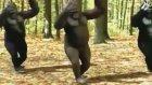 Oryantal Maymunlar