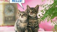 Hello Diyen Kediler