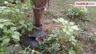 Kaplumbağa, Koskoca Ata Bakın Nasıl Saldırdı