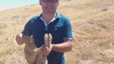 Eliyle Tavşan Yakalayan Adam