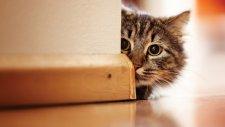 Kedileri Daha Yakından Tanımak İster Misiniz?