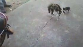Anne Kedinin Gazabı (İntikam İçerir)