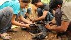 Hint Gençlerin Sıcak Katrana Bulanmış Köpeği Kurtarması