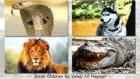 En Çok insan Öldüren 10 Hayvan Türü