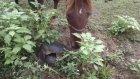 Kaplumbağa'dan Kaçan Atlar