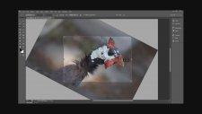 Photoshop Cs6 Yenİden Kadrajlama