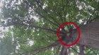 Kediyi Ağaçtan Fırlatan Sincap