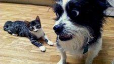 Kedi Yavrusuyla İlk Kez Karşılaşan Köpekler