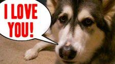 I Love You diyen hayvanlar
