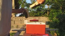 Ana Arı Çiftleştirme Kutularını Kontrol