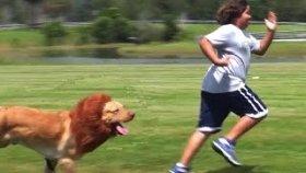 Aslan Köpek Herkesi Korkuttu