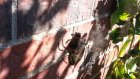 10 Saniyede Arıyı Paket Servis Yapan Örümcek