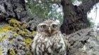 Bebek Baykuşların Kamerayla İmtihanı
