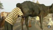 Afrika Usulü Dışkı Çıkartma (Mide İçermez)