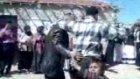 Yozgat Trakya Halayı(Selim Show)