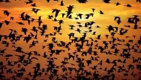 Ömer Karaoğlu - Kuşlar