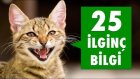 Kedilerle Ilgili 25 İlginç Bilgi