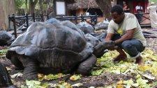 Kaplumbağalar Ülkesi