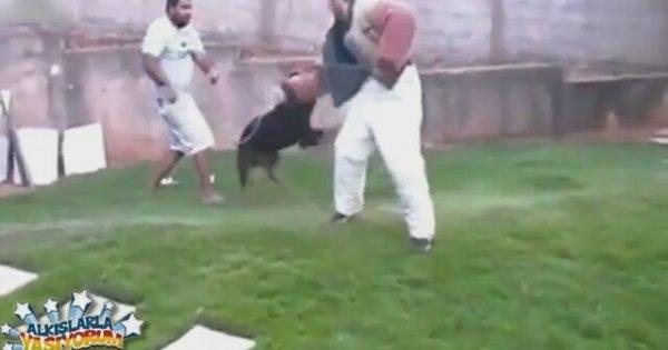 Eğitimcilerini Korkudan Öldüren Köpek