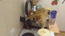 Fritözü Tuvalet Olarak Kullanan Kedi