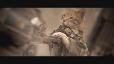Medal Of Honor Cat - Reddie Wong