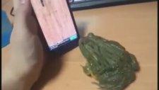 Kandırılan Kurbağa Adamı Isırdı