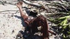 Gerçek Deniz Kızı 2