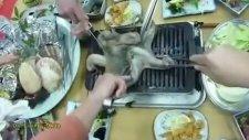 Japon İşi Yemekteyiz - Ahtapot Izgara