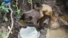Ömer Çelakıl - Teknolojiye Savaş Açan Aktivist Maymun
