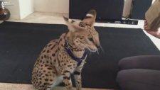 Canlı Fareyle Kedi Besleyen Kız