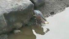Yemle Balık Avlayan Kuş