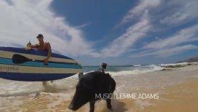 Sörf Yapan Domuz