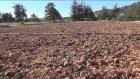 10 Milyar Sedir Tohumu Toprakla Buluşuyor